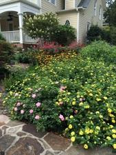 perennial_bed_spring-summer_2015_small.jpg (169x225)px